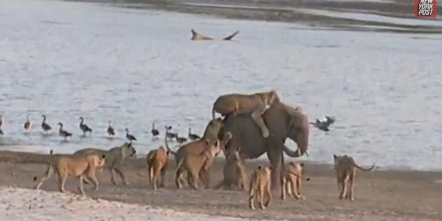 bebi-elefant-oroszlanok
