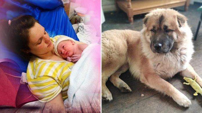 Bíróság elé állítják a szülőket, akiknek kisbabáját szétmarcangolta egy kutya - a szülők tagadják a vádakat